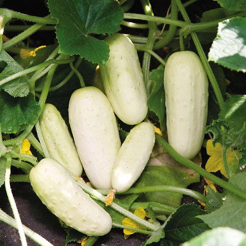 Salt and Pepper Cucumbers - 25 Seeds