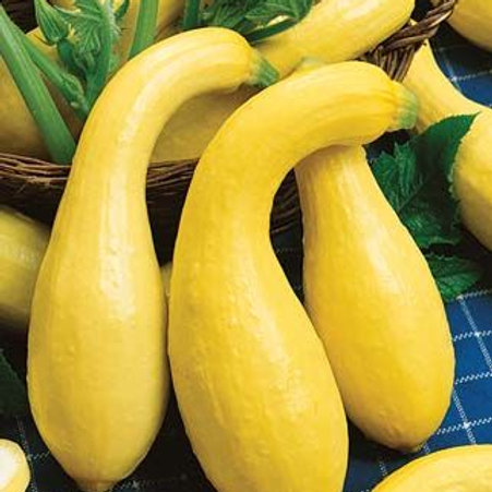 Yellow Crookneck Squash - 25 Seeds