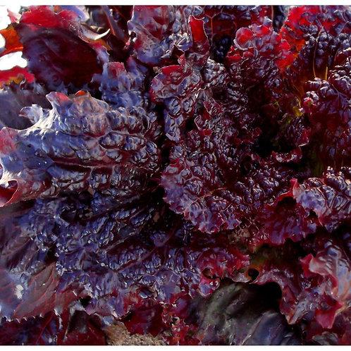 Midnight Ruffles Lettuce - 300 Seeds