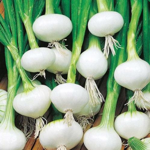 Crystal White Wax Onion - 200 Seeds
