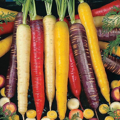 Rainbow Blend Carrot - 1000 Seeds