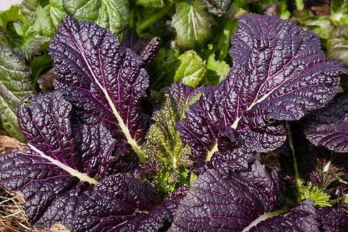 Osaka Purple Mustard - 1000 Seeds
