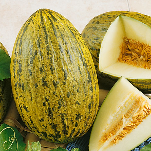 Piel De Sapo Cantaloupe - 25 Seeds