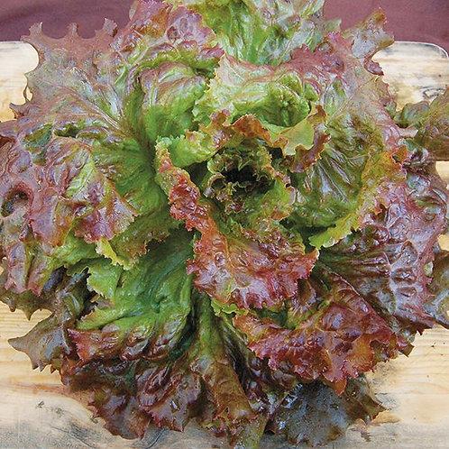 Red Sails Lettuce - 250 Seeds