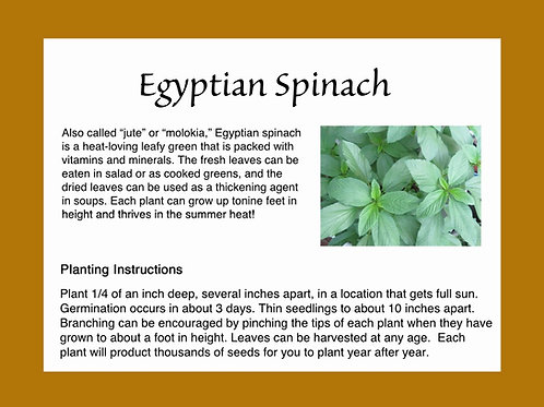 Egyptian Spinach Seeds 500ct