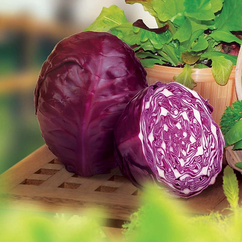 Red Acre Cabbage - 400 Seeds