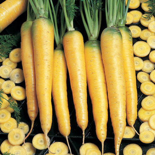 Yellowstone Carrot - 200 Seeds
