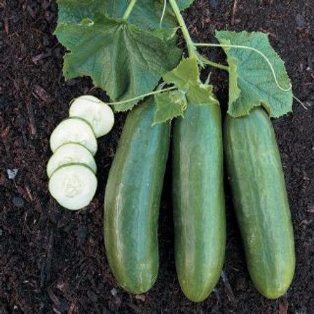 Beit Alpha Cucumber - 100 Seeds