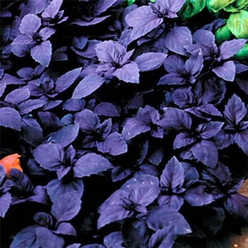 Dark Opal Basil - 1000 Seeds