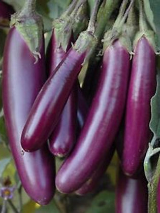 Long Purple Eggplant - 300 Seeds