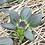 Thumbnail: Red Tatsoi Mustard - 900 Seeds