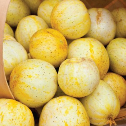Lemon Cucumber - 75 Seeds