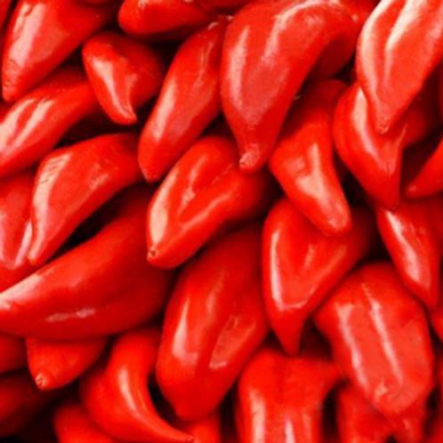 Nu Mex College Hot Pepper - 50 Seeds