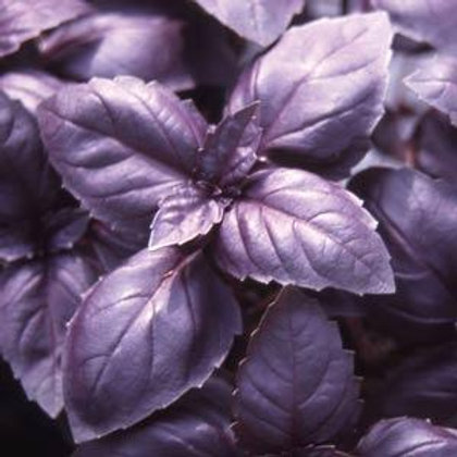Basil - Red Rubin - 350 Seeds
