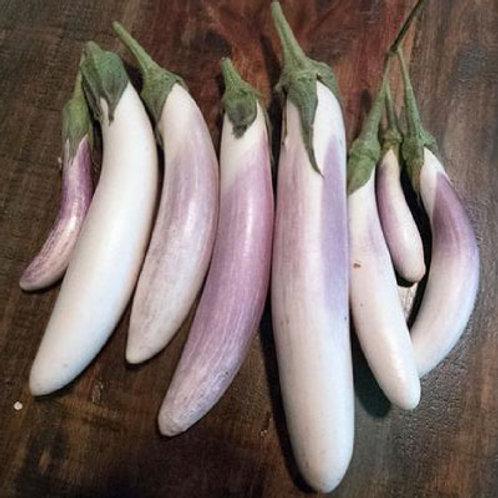 Bride Eggplant - 50 Seeds