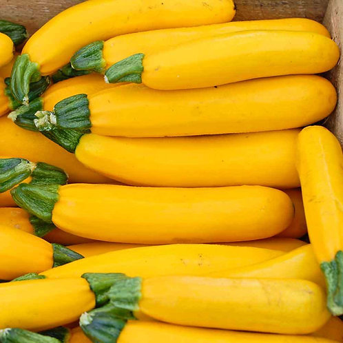 Squash Summer - Zucchini Golden - 20 Seeds