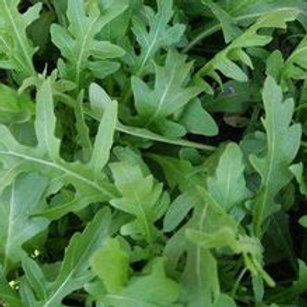 Surrey Arugula - 600 Seeds