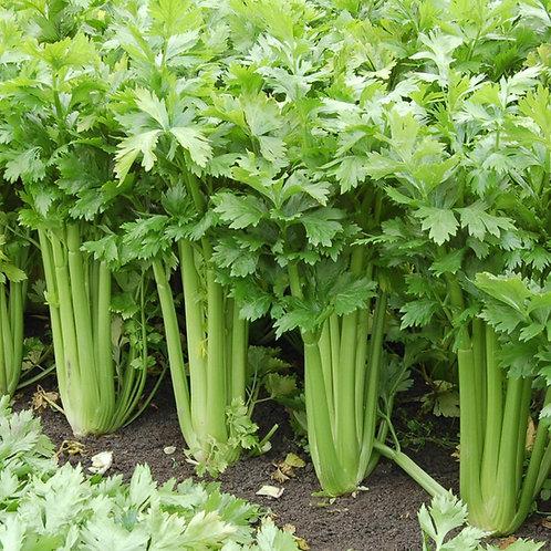 Utah Celery - 500 Seeds