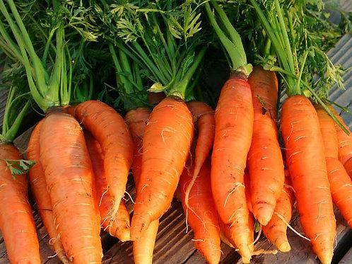 Nantes Mini Core Carrot - 1000 Seeds