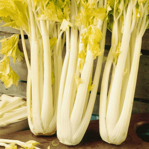 Golden Pascal Celery 200 Seeds