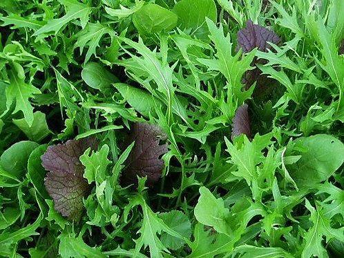 Spicy Salad Mix - 2000 Seeds