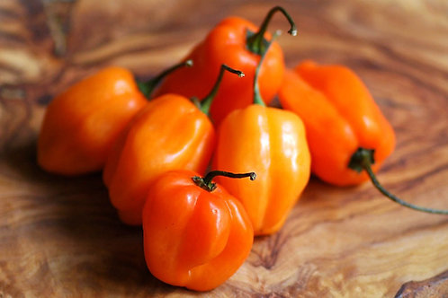 Habanero Orange Hot Pepper - 25 Seeds