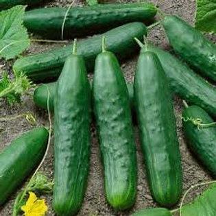 Straight Eight Cucumber - 25 Seeds
