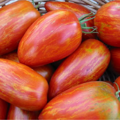 Speckled Roman Tomato - 25 Seeds
