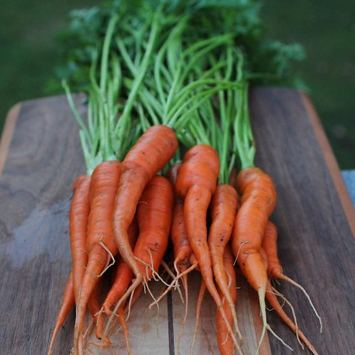 Tendersweet Carrot - 1000 Seeds