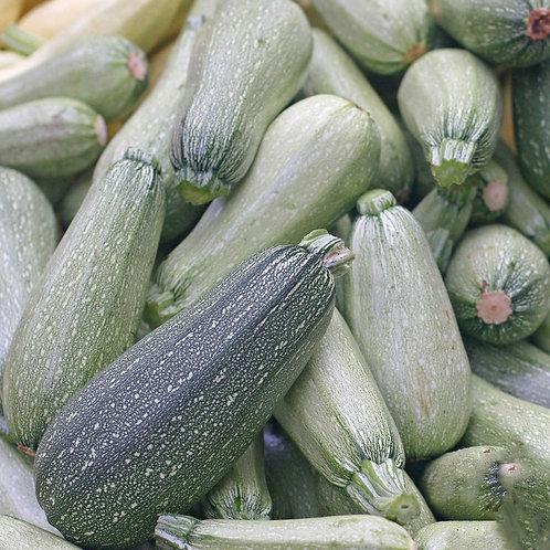 Zucchini Grey Summer Squash - 25 Seeds