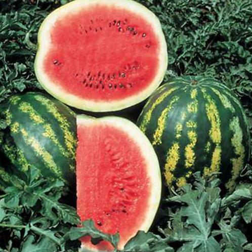 Crimson Sweet Watermelon - 20 Seeds