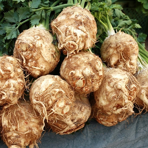 Celeriac, Giant Prague - 250 Seeds