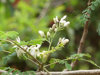 blossom-3474906_1920.jpg