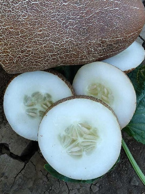 Brown Russian Cucumber - 15 Seeds