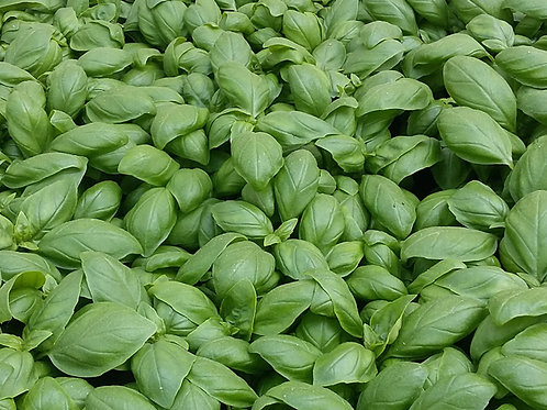 Eleonora Basil - 150 Seeds