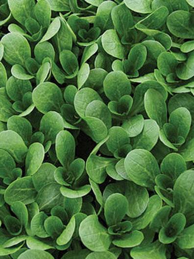 French Corn Salad - 100 Seeds