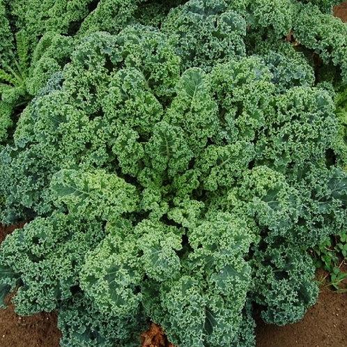 Dwarf Siberian Kale - 300 Seeds