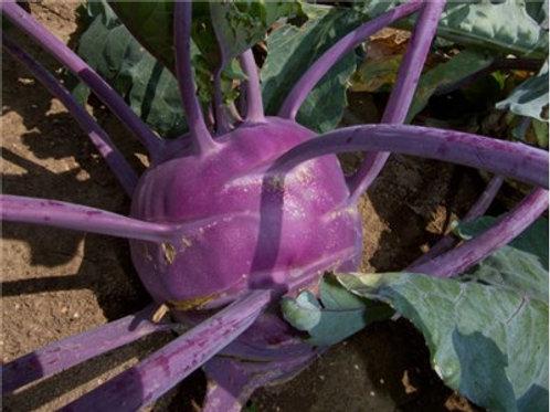 Purple Vienne Kohlrabi - 75 Seeds