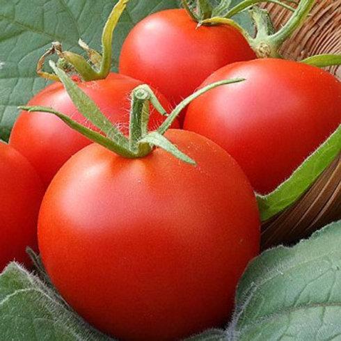 Moneymaker Tomato - 50 Seeds