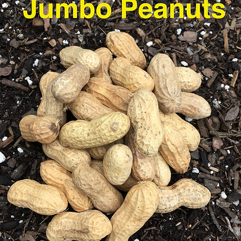 Jumbo Peanuts 2oz