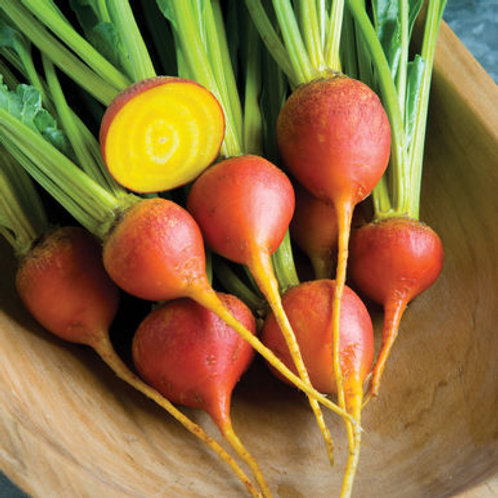 Touchstone Gold Beet - 75 Seeds