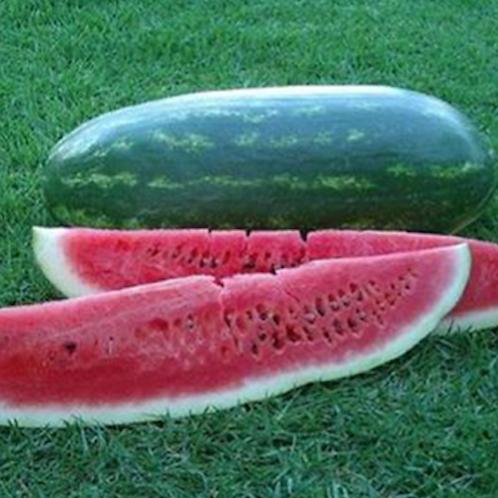 Congo Watermelon - 20 Seeds