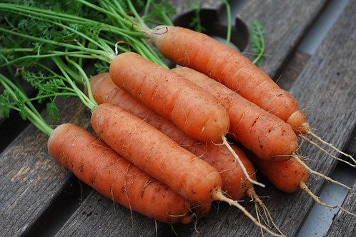 Bambino Carrot - 300 Seeds