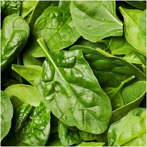 Noble Giant Spinach - 250 Seeds