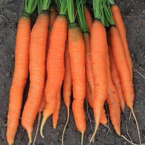 Amsterdam Carrot - 1000 Seeds