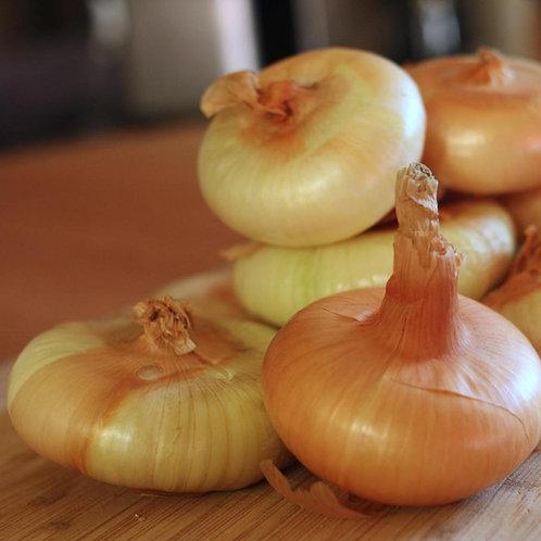 Cipollini Yellow Onion - 300 Seeds