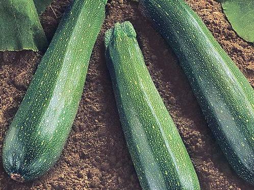 Black Beauty Zucchini - 40 Seeds