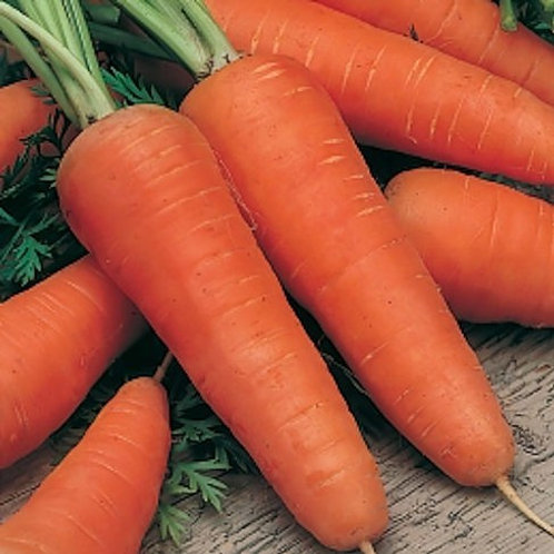 Chantenay Red Core Carrot - 1000 Seeds