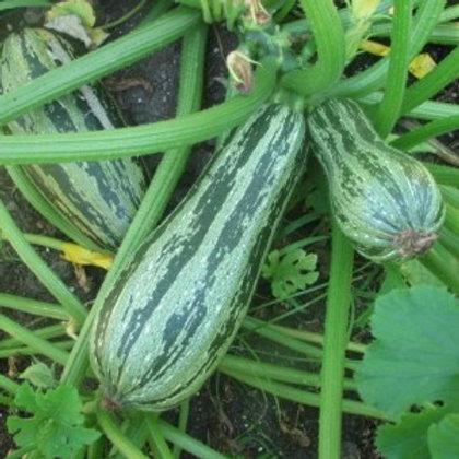 Caserta Zucchini - 20 Seeds