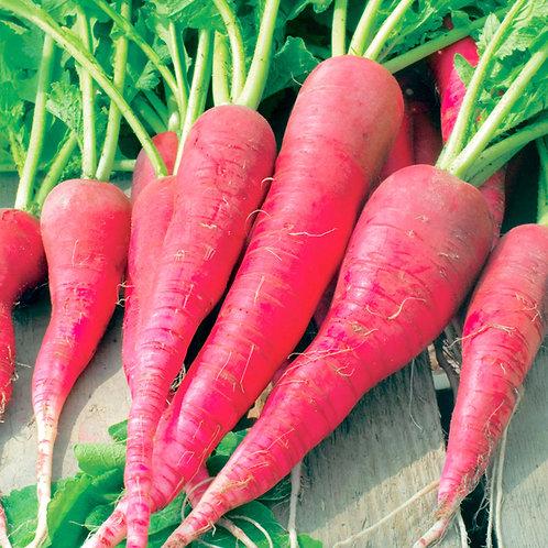 Long Scarlet Cincinnati Radish - 250 Seeds